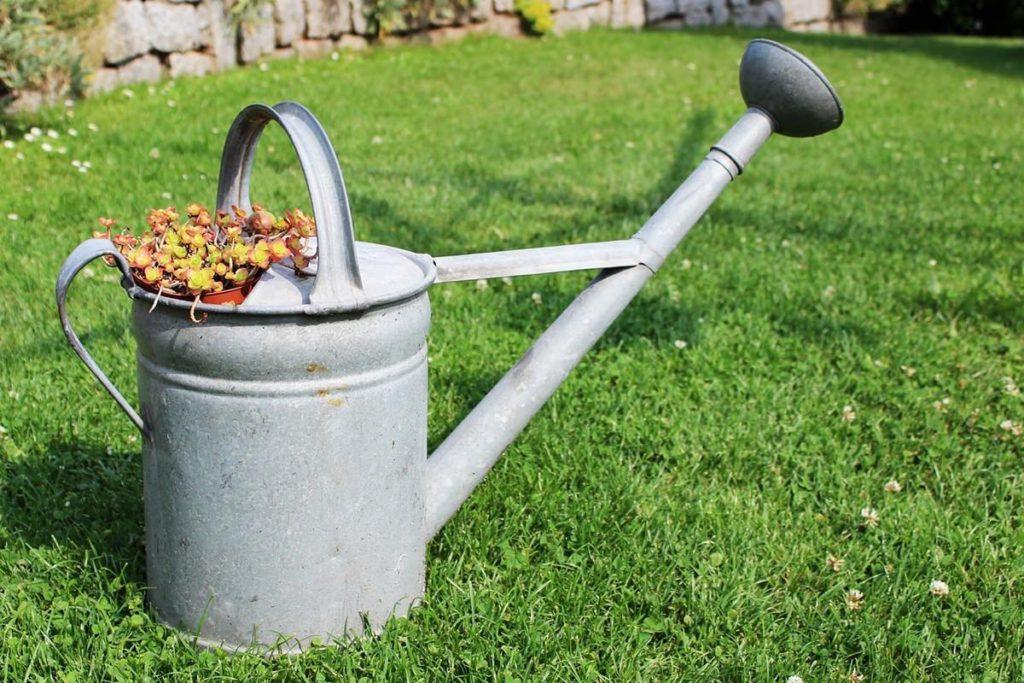 gepflegter Rasen Gießkanne
