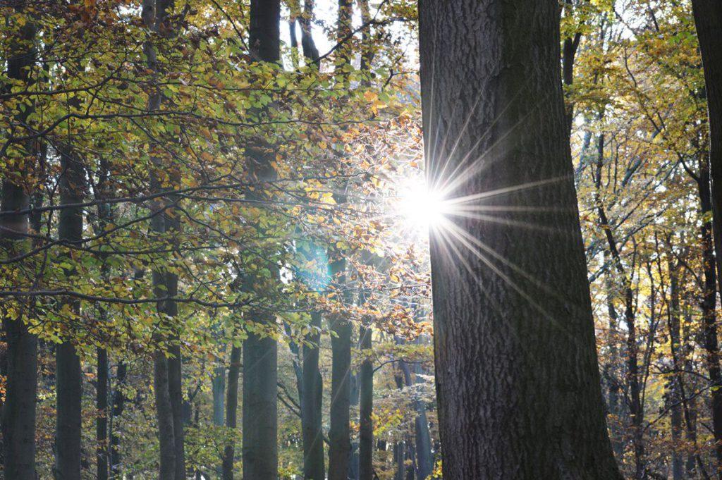 gesund durch den winter sonnenstrahlen lifestyle blog hannover
