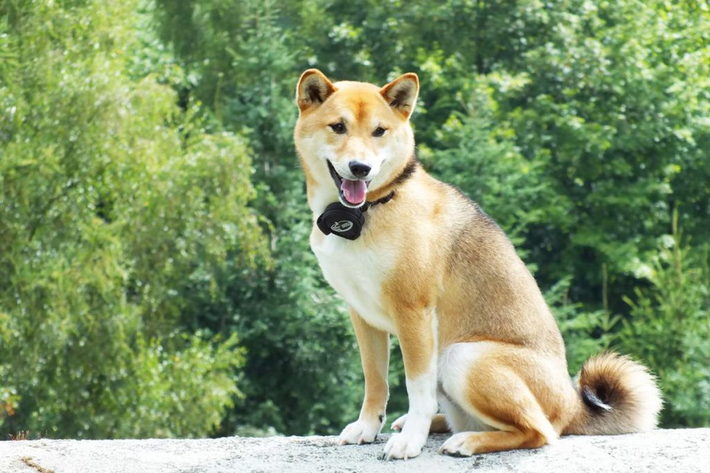 shiba inu fressnapf aktion tierisch engagiert