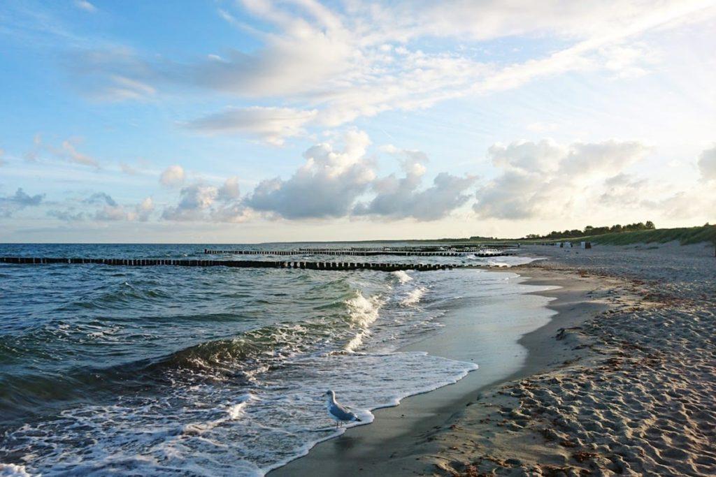 ostsee strand ostsee-urlaub moewe