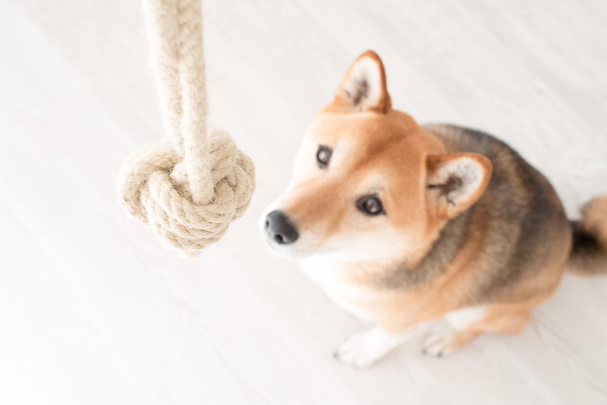 Affenfaust Hundespielzeug DIY Tau Ball Fressnapf Magazin
