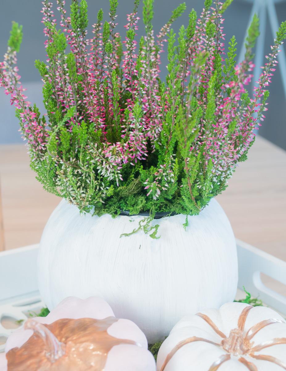 diy herbstdeko kuerbis bepflanzen