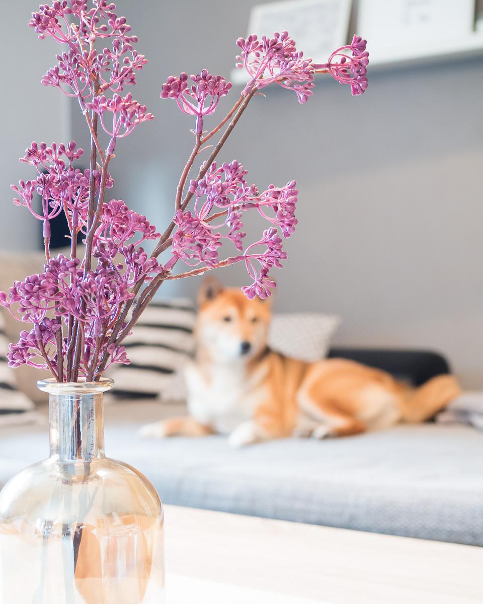 wohnzimmer deko hund sofa otto shopping festival
