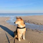 Titelbild Leben mit Hund Shiba Inu Strand Sylt