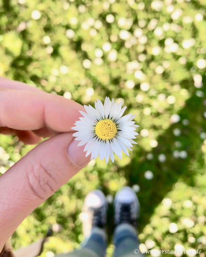 Wochenendpost KW14 Endlich Fruehling Gaensebluemchen