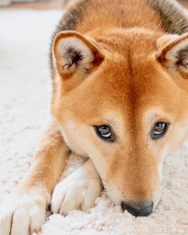 leben mit hund zahnreinigung sticks dentalife