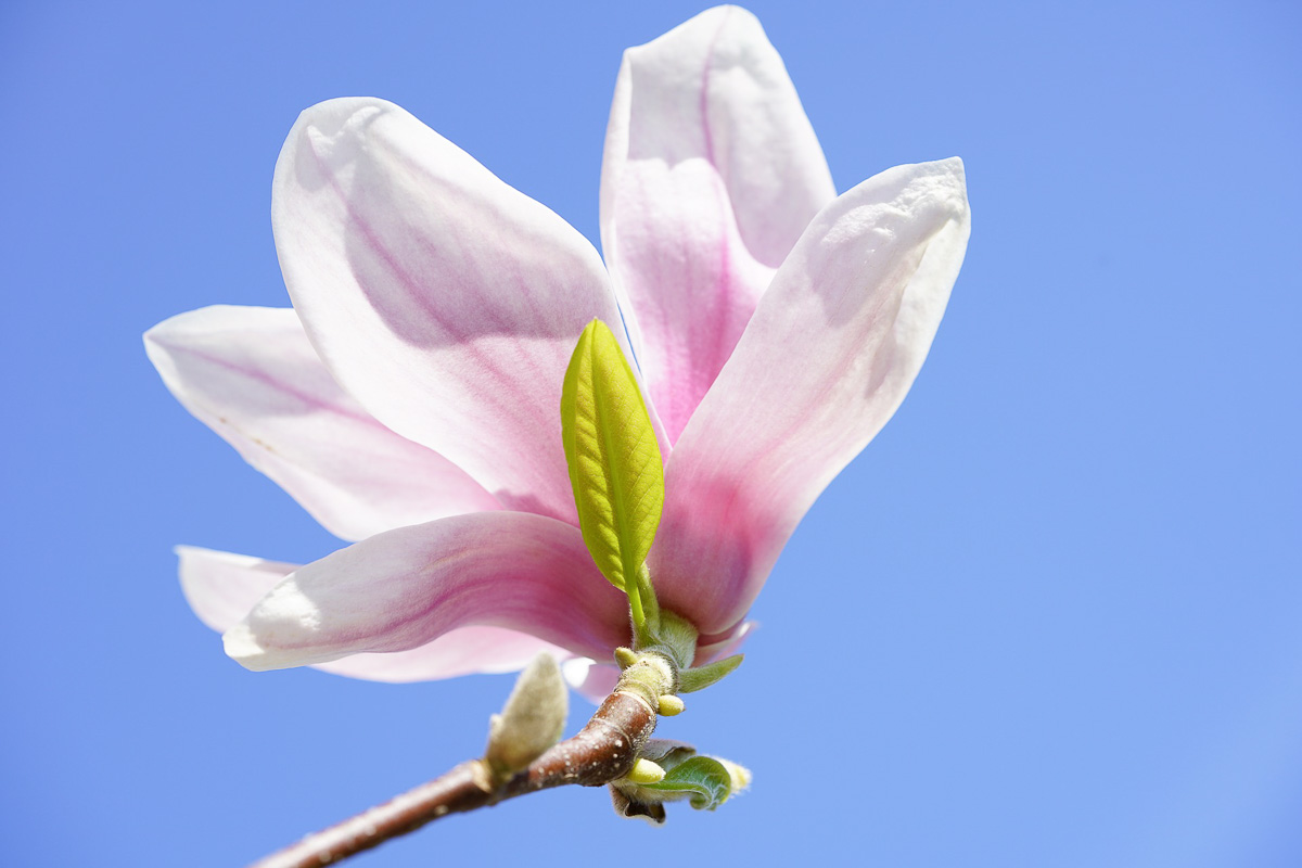 fruehling wochenendpost magnolie never give up