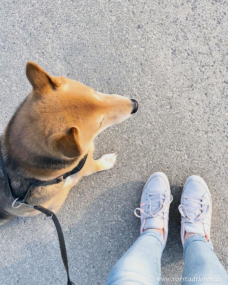 Mehr bewegung alltag spazieren gehen mit hund