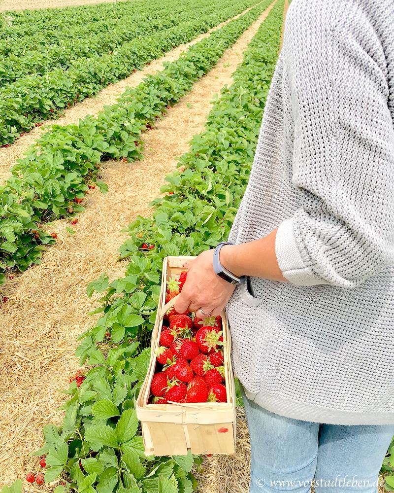 Erdbeerrezepte frische Erdbeeren
