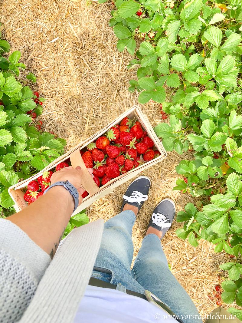 Sonntagsglueck Erdbeerrezepte Erdbeeren pfluecken