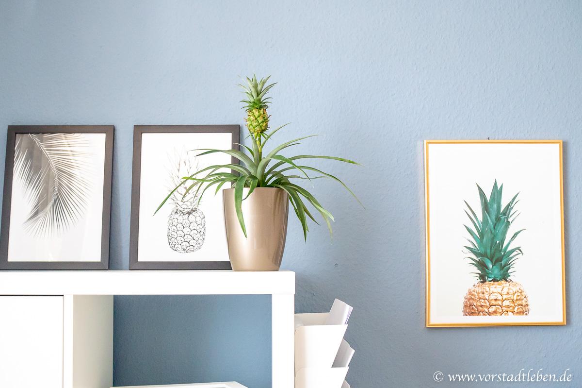 ananas selber ziehen ananaspflanze