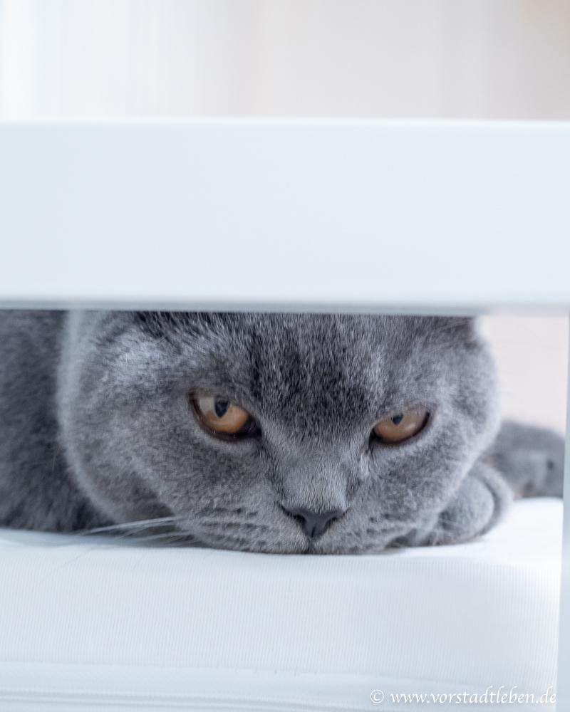 Katzenblick BKH