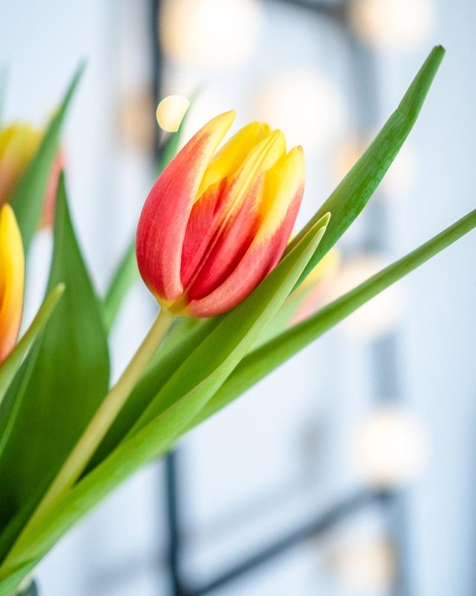 Tipps gegen den Winterblues farbe tulpen
