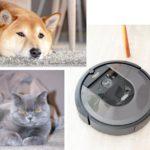 Haustiere und iRobot Rommba i7pl