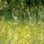 Blumenwiese Heuschnupfen Allergie