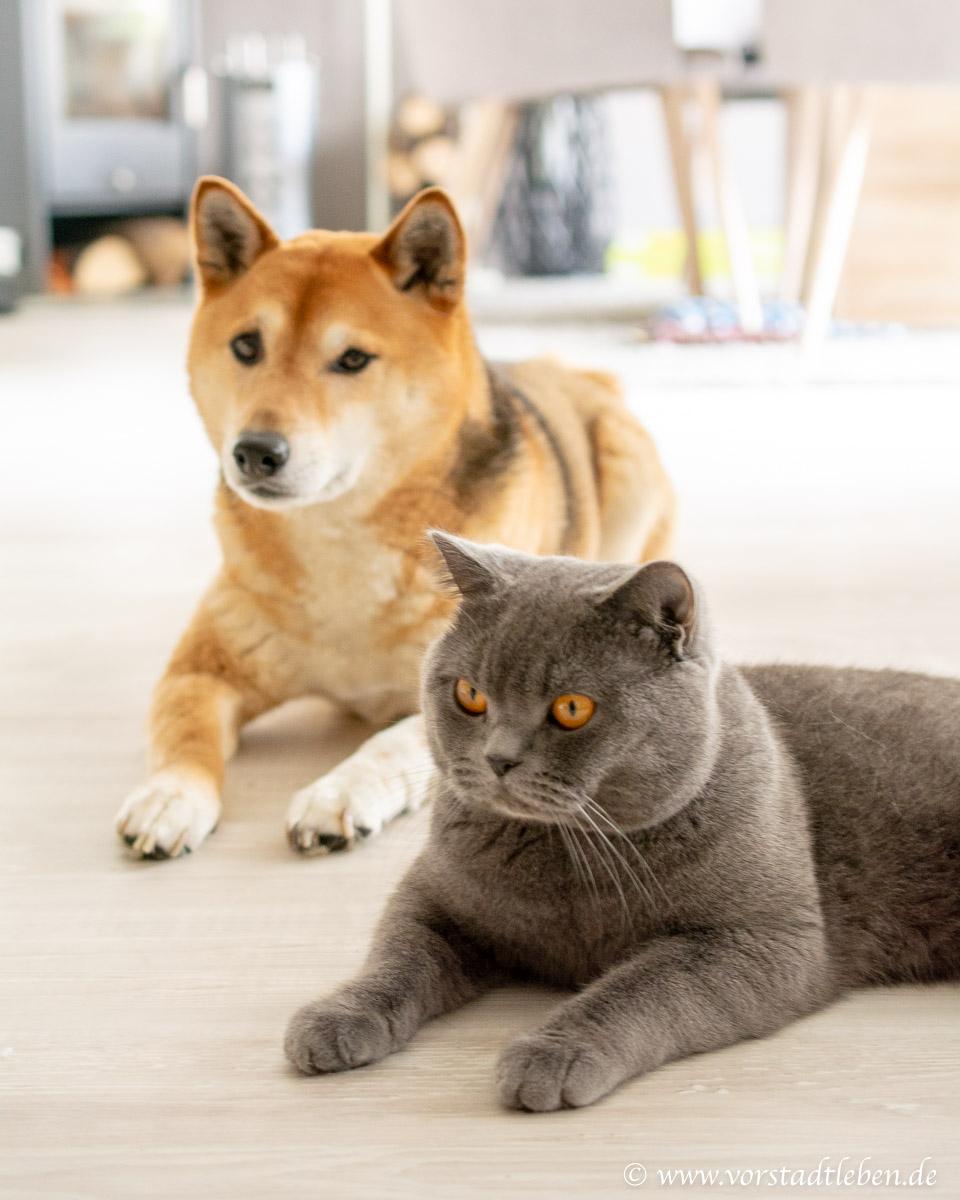 Hund und Katze Zusammenleben Tipps Zookauf shop de