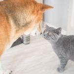 Hund und Katze beschnuppern Zookauf shop de