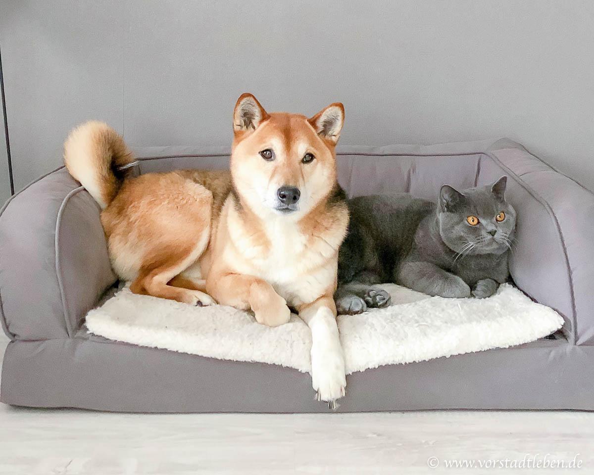 Hund und Katze zusammen zookauf shop de