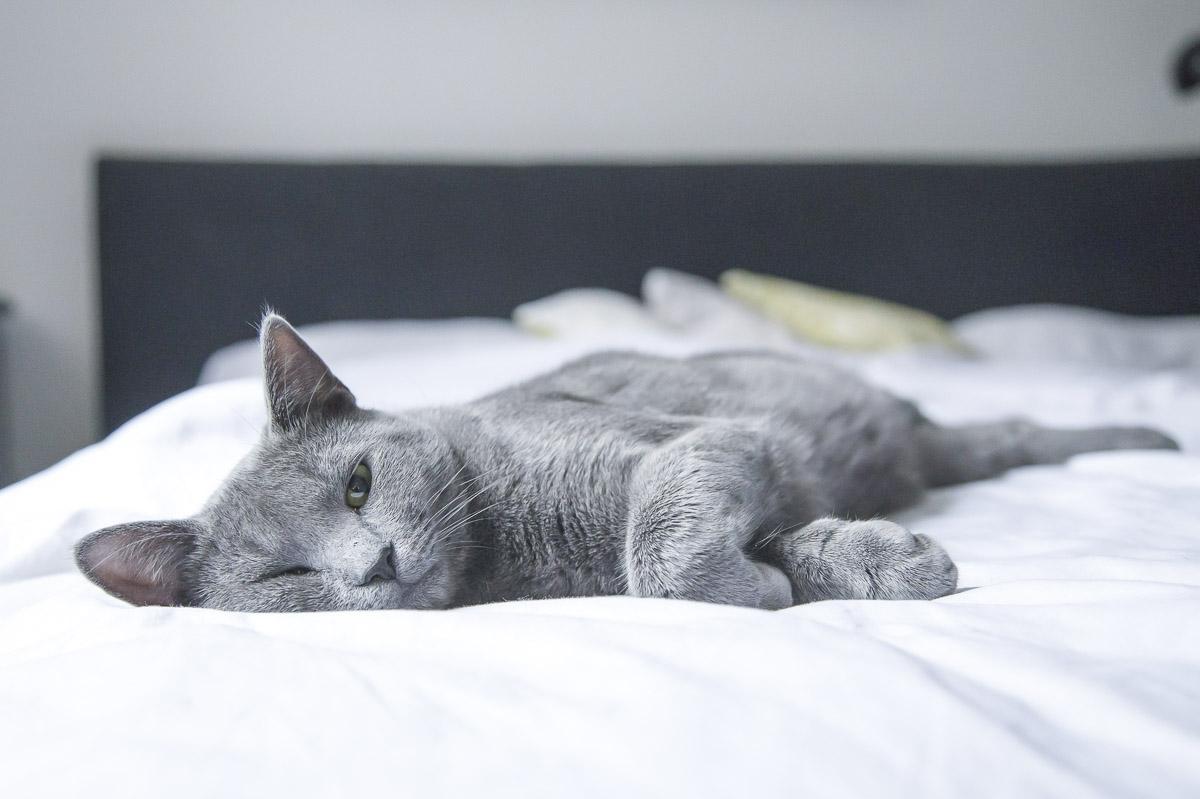 Sommerhitze schlaflos katze